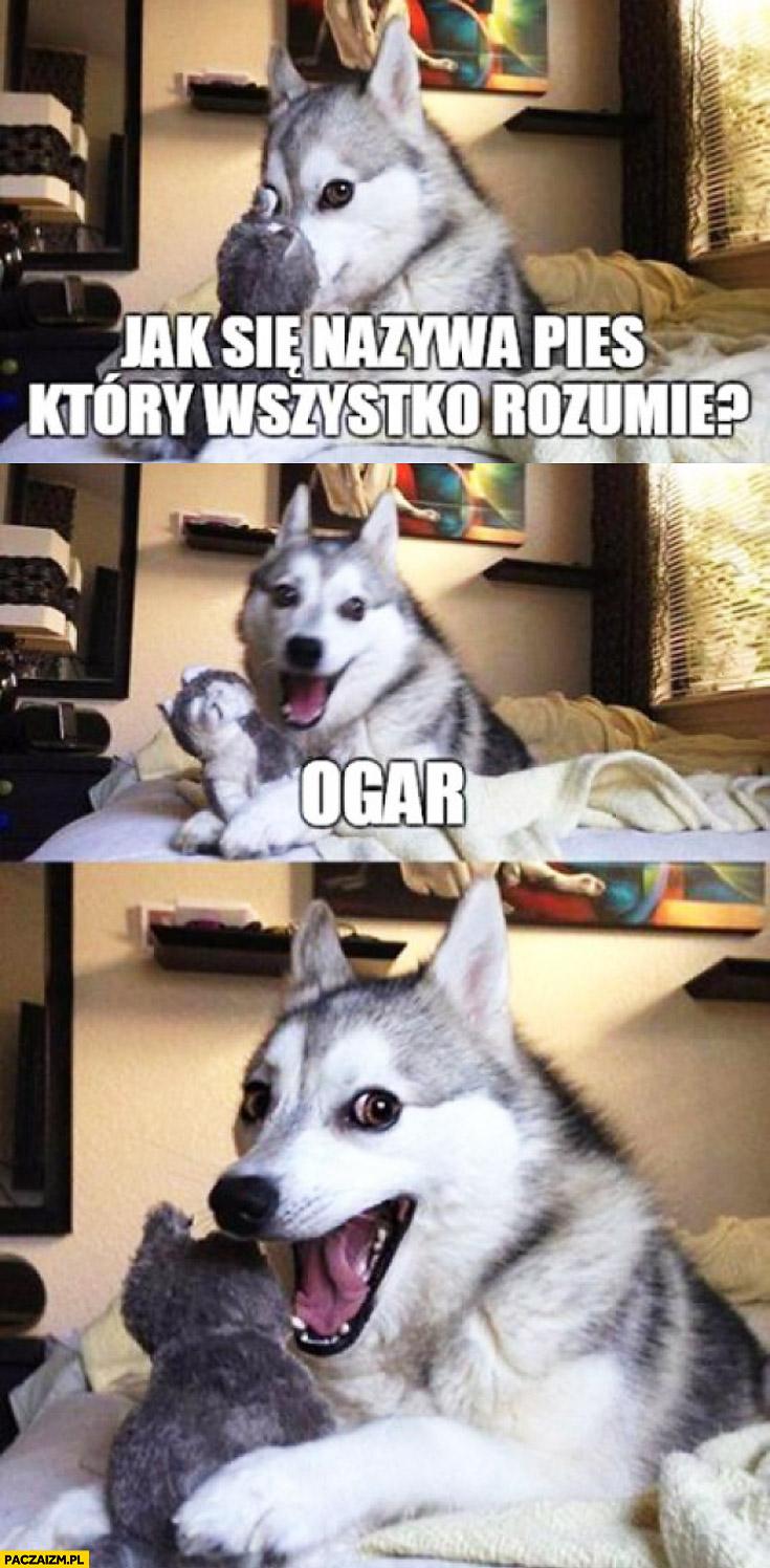 Jak się nazywa pies który wszystko rozumie? ogar