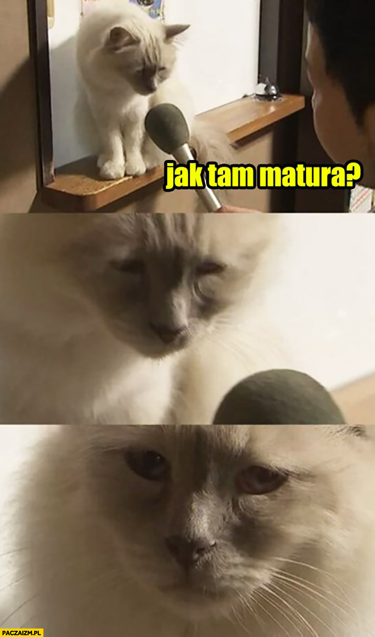 Jak tam matura? Smutny kot