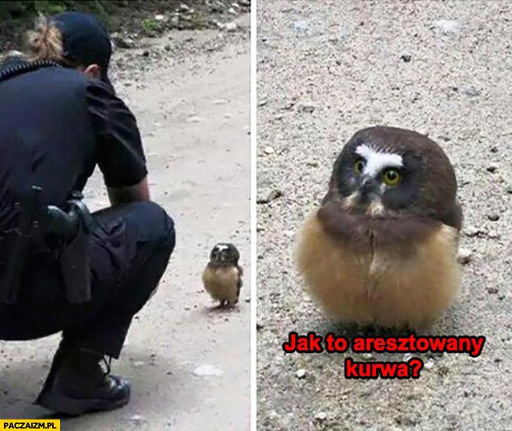 Jak to aresztowany kurna? Zdziwiona sowa