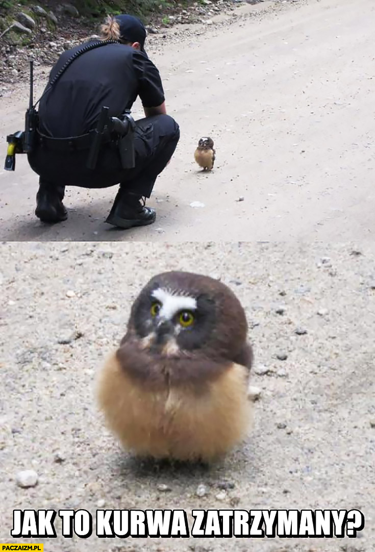 Jak to kurna zatrzymany? Zdziwiony ptak