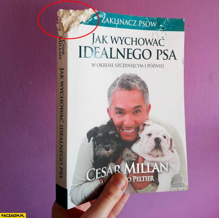 Jak wychować idealnego psa pogryziona książka