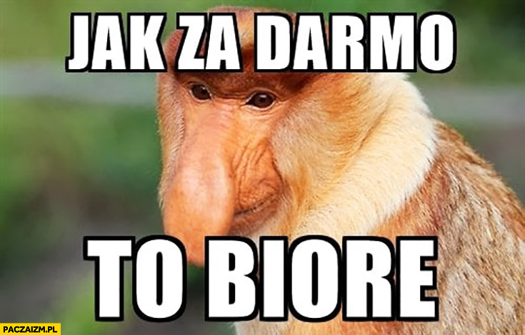 Jak za darmo to biorę typowy Polak nosacz małpa