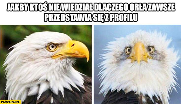 Jakbyś nie wiedział dlaczego orła zawsze przedstawia się z profilu