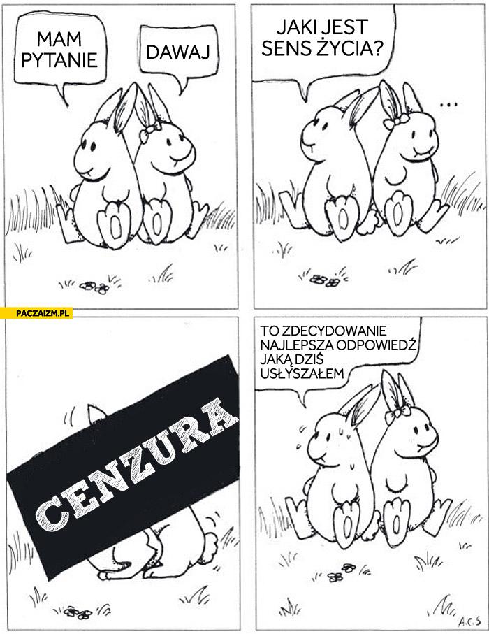 Jaki jest sens życia króliczki