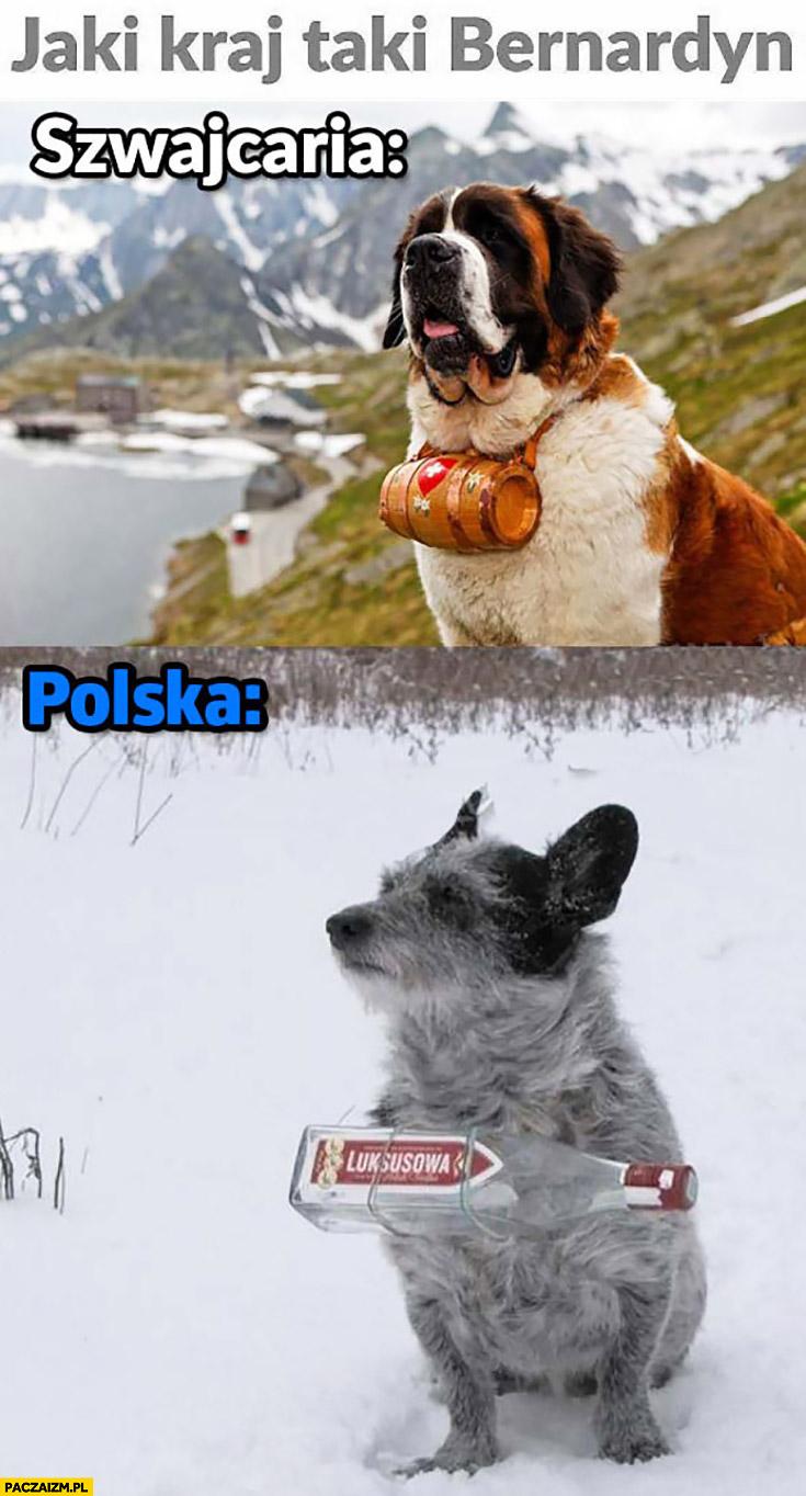 Jaki kraj taki bernardyn Szwajcaria Polska kundel wódka luksusowa