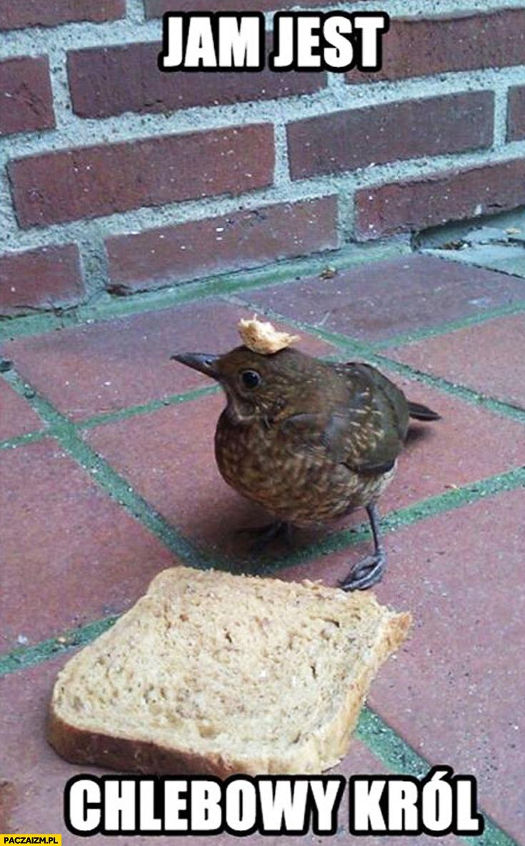 Jam jest chlebowy król ptak gołąb wróbel