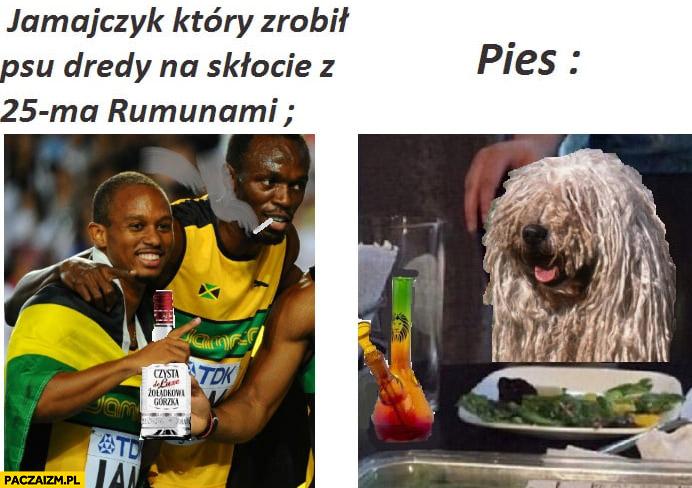 Jamajczyk który robił psu dredy na skłocie z Rumunami pies