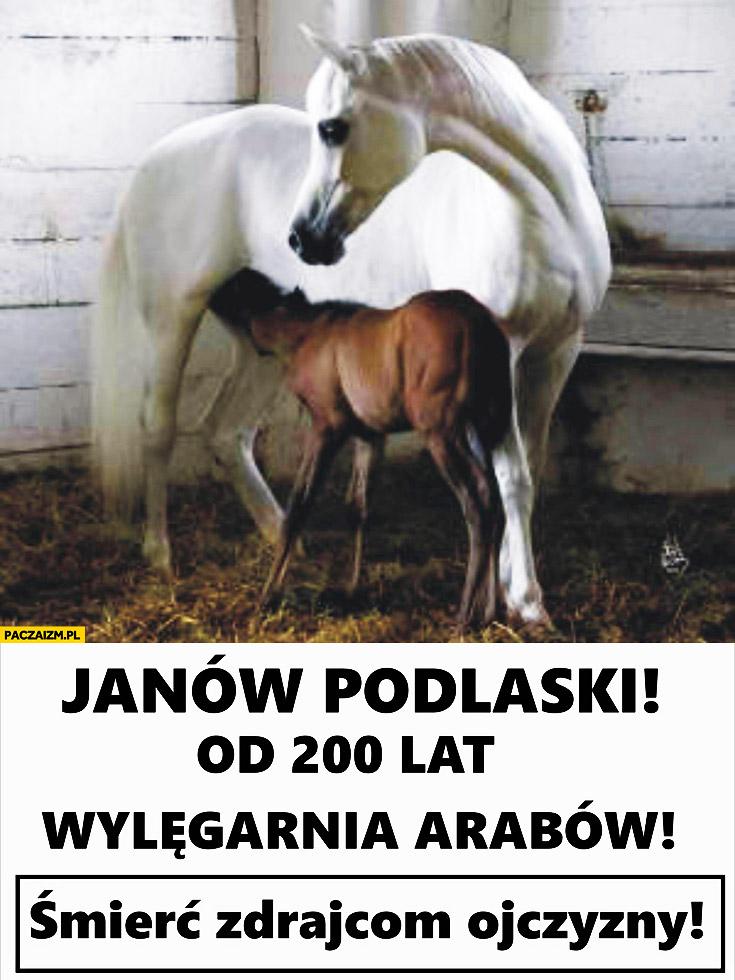 Janów Podlaski od 200 lat wylęgarnia arabów konie. Śmierć zdrajcom ojczyzny