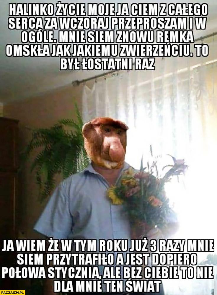 Janusz nosacz małpa przeprasza żonę, że ja uderzył pobił typowy Polak