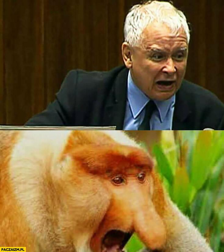 Jarosław Kaczyński w sejmie typowy Polak nosacz małpa zły zdenerwowany wkurzony