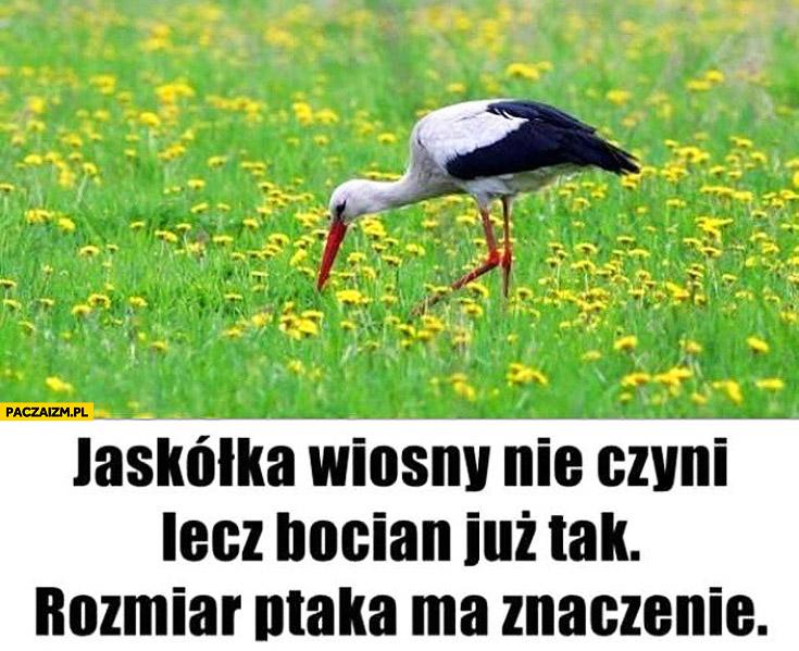 Jaskółka wiosny nie czyni lecz bocian już tak rozmiar ptaka ma znaczenie