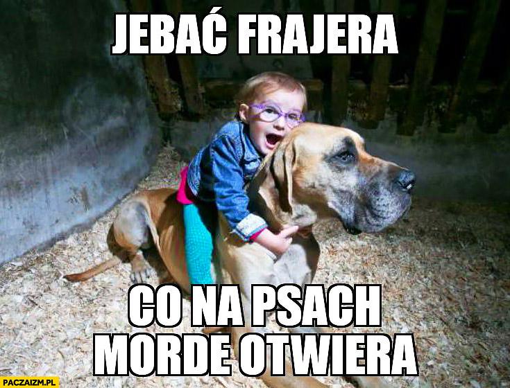 Jechać frajera co na psach mordę otwiera dziecko siedzi na psie
