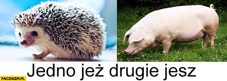 Jedno jeż drugie jesz jeżyk świnia