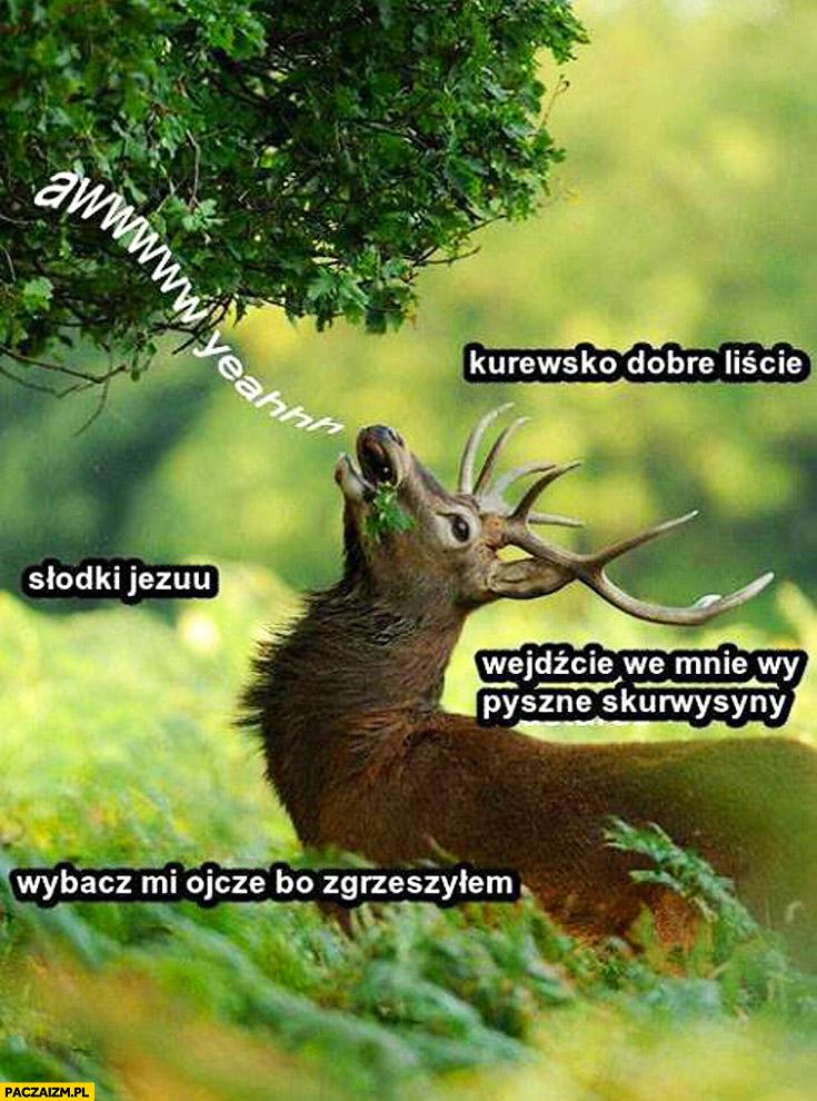 Jeleń dobre liście wejdzcie we mnie wy pyszne skurwysyny