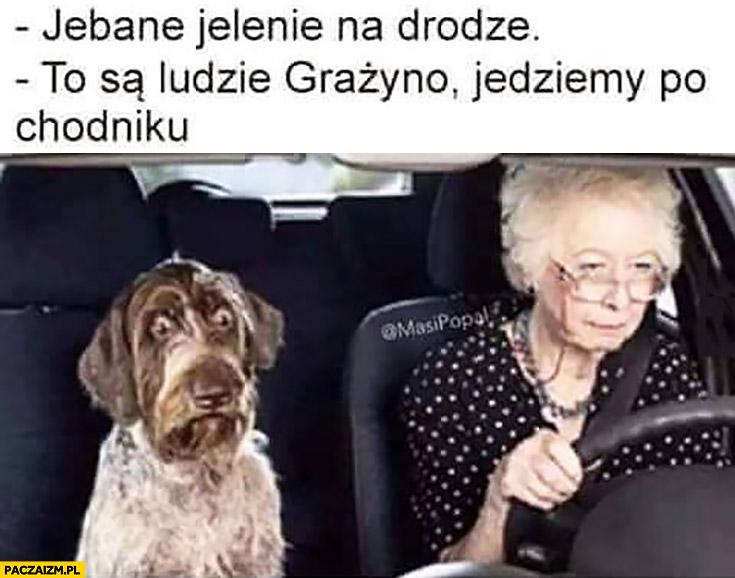 Jelenie na drodze, to są ludzie Grażyno, jedziemy po chodniku przerażony pies