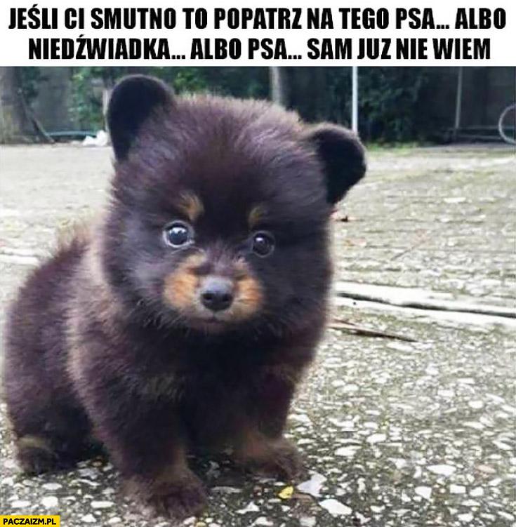 Jeśli Ci smutno to popatrz na tego psa albo niedźwiadka albo psa sam już nie wiem