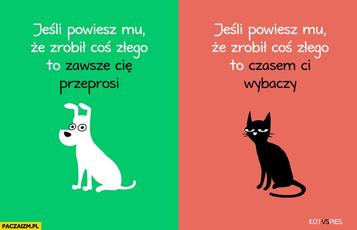 Jeśli powiesz mu, że zrobił coś złego pies zawsze Cię przeprosi, kot czasem ci wybaczy. Kot vs pies
