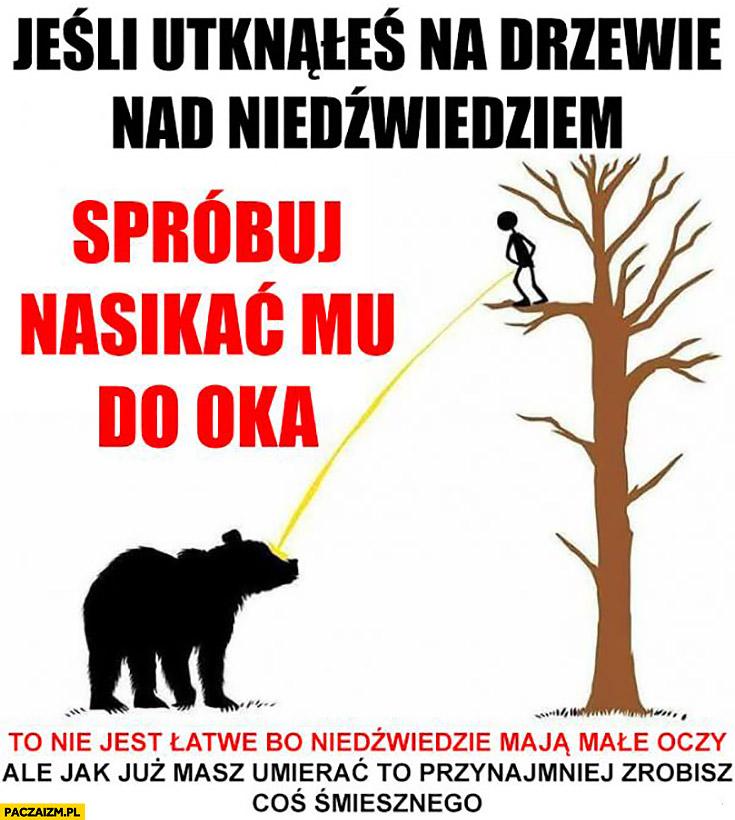 Jeśli utknąłeś na drzewie nad niedźwiedziem spróbuj nasikać mu do oka. To nie jest łatwe, bo niedźwiedzie mają małe oczy, ale jak już masz umierać przynajmniej zrobisz coś śmiesznego