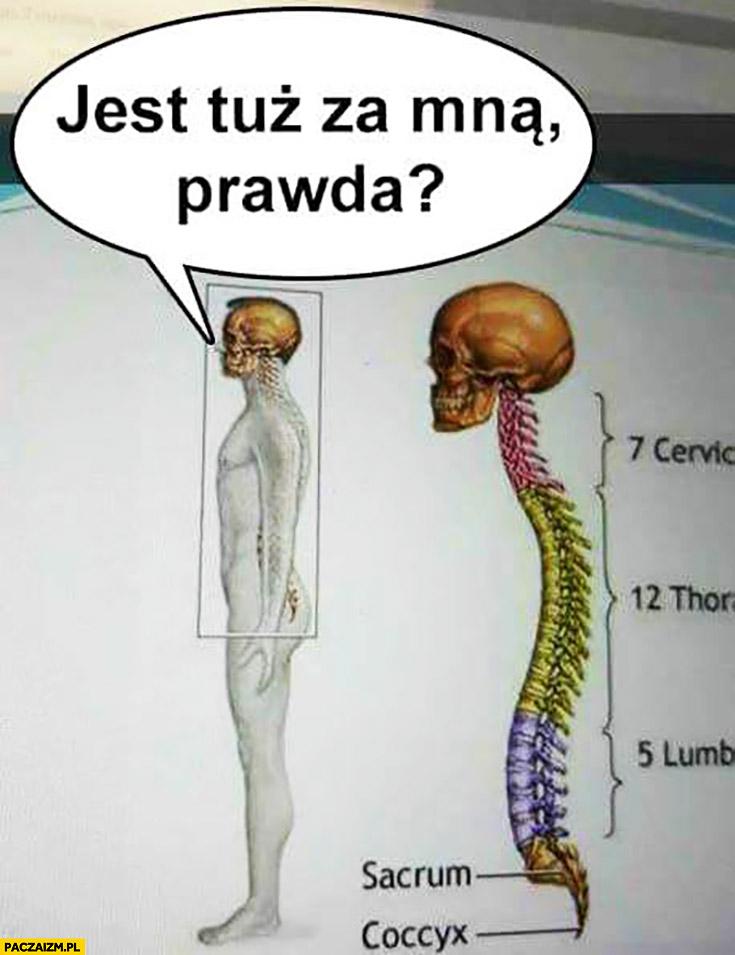 Jest tuż za mną, prawda? Książka biologia ilustracja kręgosłupa