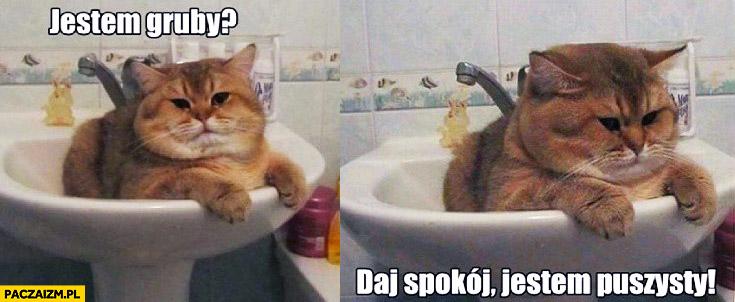 Jestem gruby daj spokój jestem puszysty kot