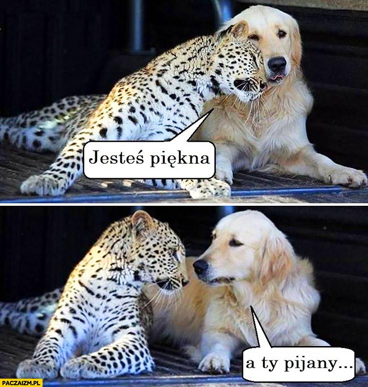 Jesteś piękna, a Ty pijany pies gepard