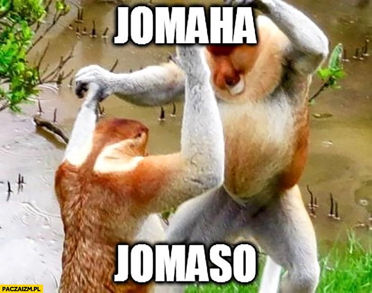 Jomaha jomaso typowy Polak nosacz małpa tańczy Modern Talking