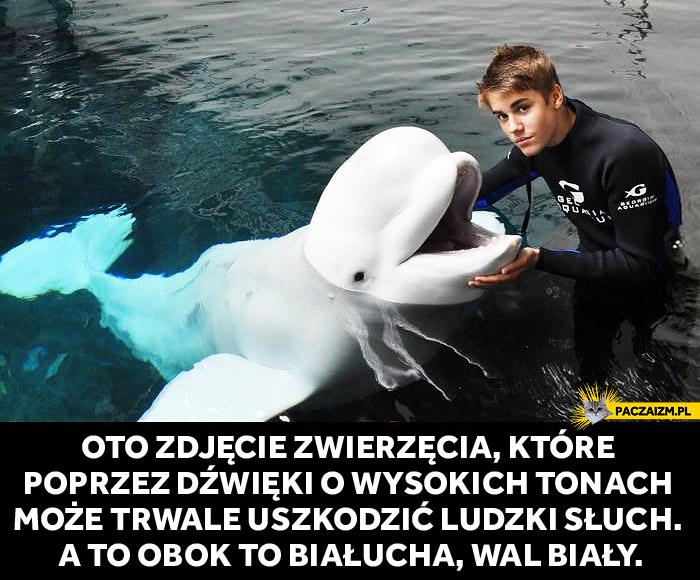 Justin Bieber zwierzę