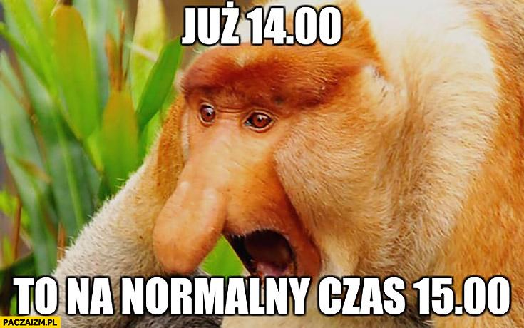 Już 14:00 to na normalny czas 15:00 typowy Polak nosacz małpa