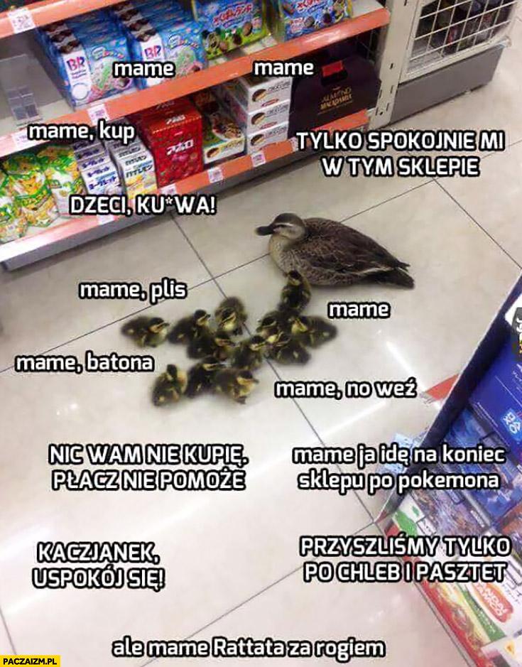 Kaczka z pisklętami w sklepie na zakupach typowa mama z dziećmi