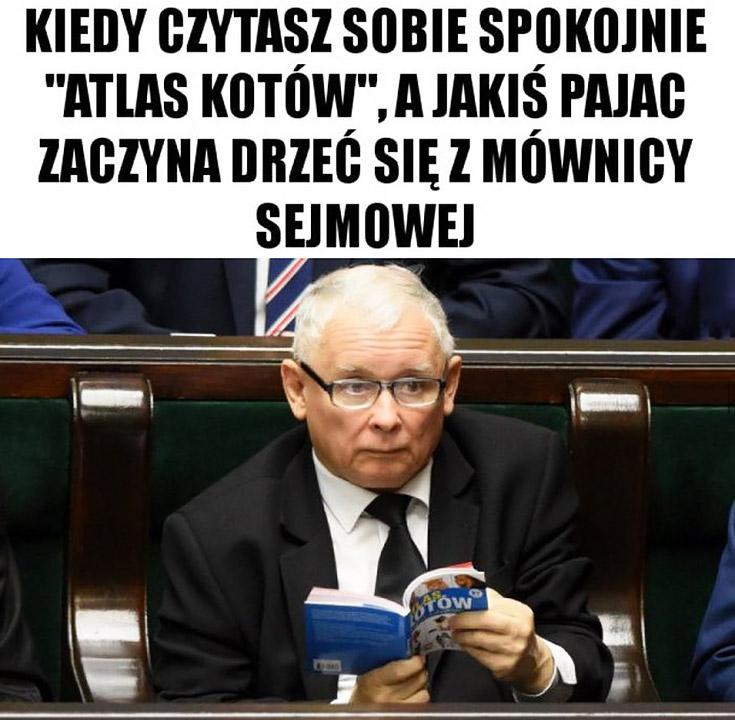 Kaczyński kiedy czytasz sobie spokojnie atlas kotów a jakiś pajac zaczyna drzeć się z mównicy sejmowej