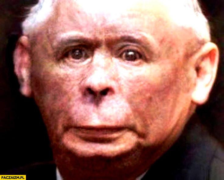 Kaczyński małpa przeróbka twarzy