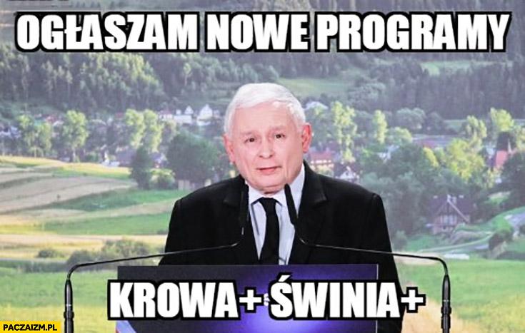 Kaczyński ogłaszam nowe programy krowa plus i świnia plus