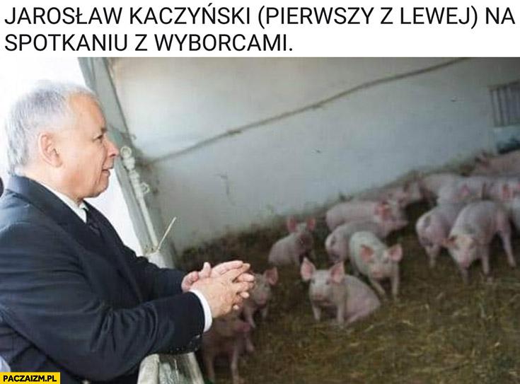 Kaczyński pierwszy z lewej na spotkaniu z wyborcami świniami