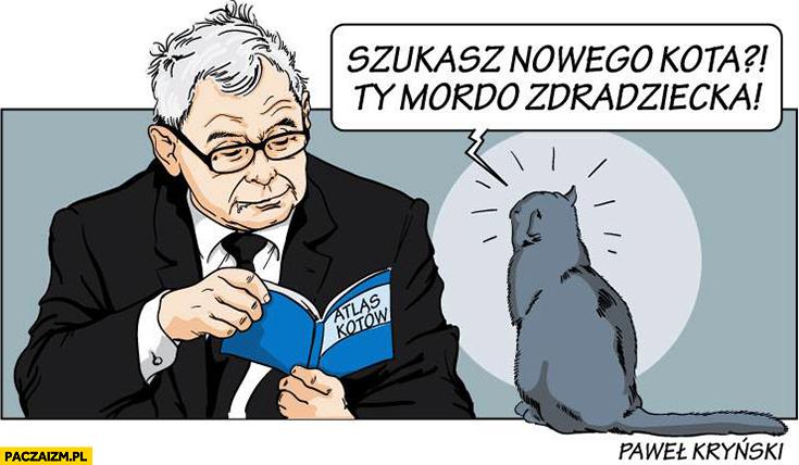 Kaczyński szukasz nowego kota? Ty mordo zdradziecka czyta atlas kotów Kryński