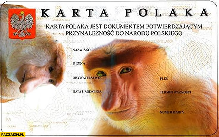Karta Polaka dokument potwierdzający przynależność do narodu polskiego typowy Polak nosacz małpa