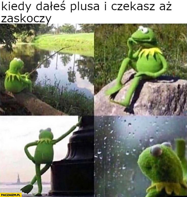 Kermit kiedy dałeś plusa i czekasz aż zaskoczy Wykop