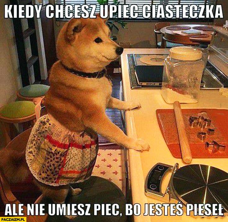Kiedy chcesz upiec ciasteczka, ale nie umiesz piec bo jesteś pieseł pies kucharz