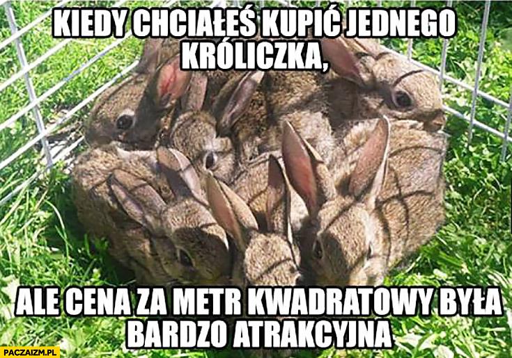 Kiedy chciałeś kupić jednego króliczka ale cena za metr kwadratowy była bardzo atrakcyjna
