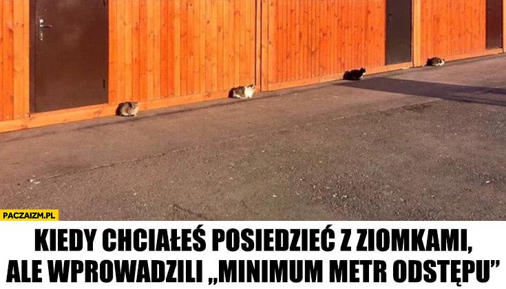 Kiedy chciałeś posiedzieć z ziomkami ale wprowadzili minimum metr odstępu koty