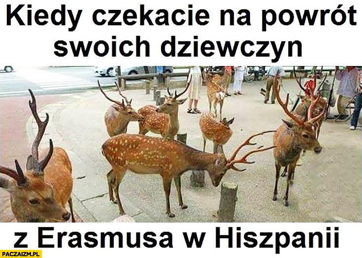 Kiedy czekacie na powrót swoich dziewczyn z Erasmusa w Hiszpanii jelenie łosie