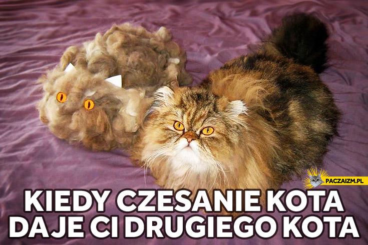Kiedy czesanie kota daje Ci drugiego kota