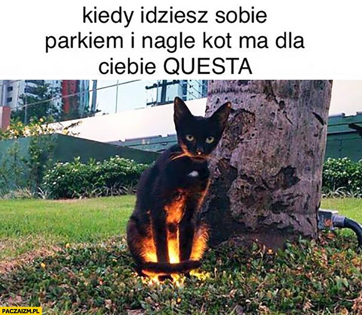 Kiedy idziesz sobie parkiem i nagle kot ma dla Ciebie questa podświetlony na lampie