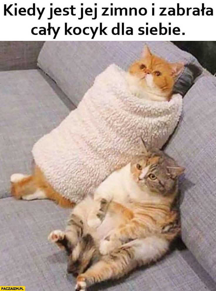 Kiedy jest jej zimno i zabrała cały kocyk dla siebie smutny kot koty