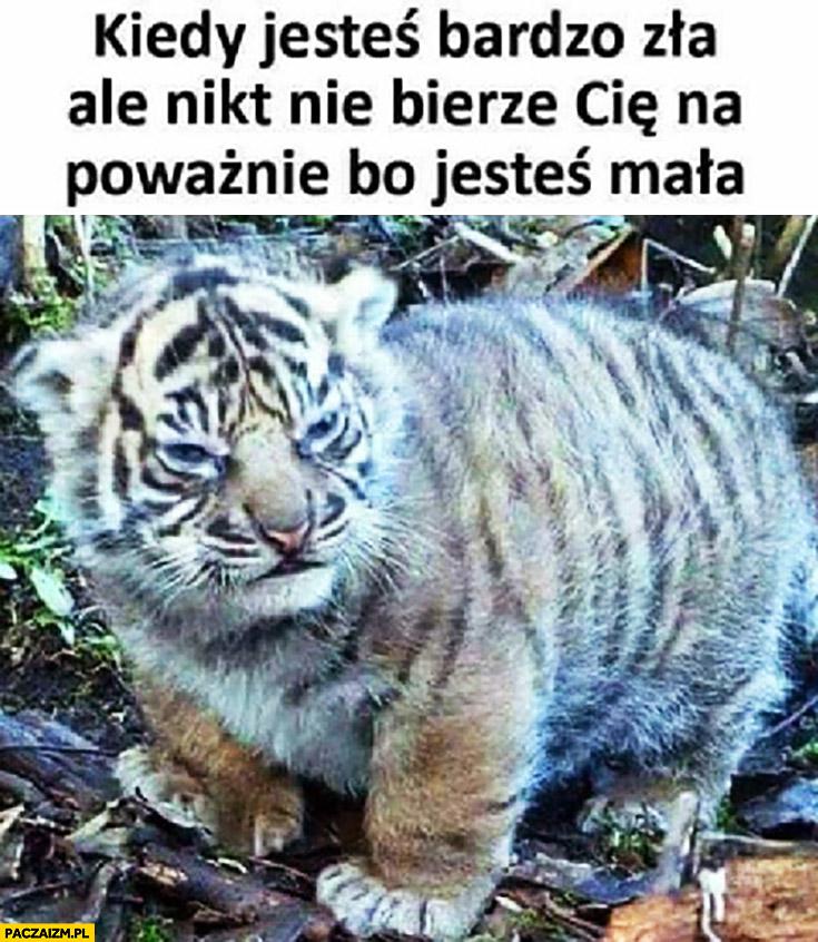 Kiedy jesteś bardzo zła ale nikt nie bierze Cię na poważnie bo jesteś mała tygrys tygrysek