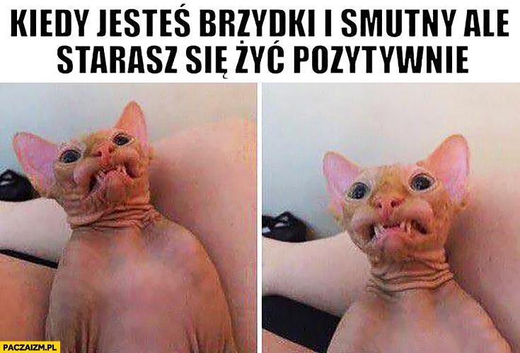 Kiedy jesteś brzydki i smutny ale starasz się żyć pozytywnie kot z dziwną miną