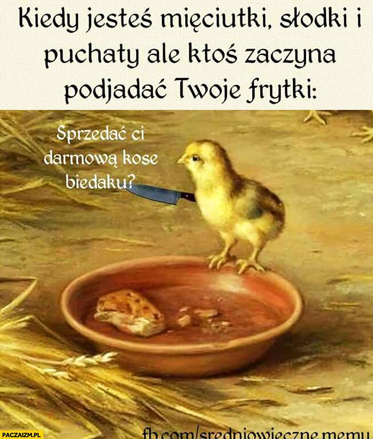 Kiedy jesteś mięciutki, słodki i puchaty ale ktoś zaczyna podjadać Twoje frytki: sprzedać Ci darmową kosę biedaku? Ptak ptaszek