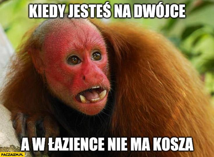 Kiedy jesteś na dwójce a w łazience nie ma kosza małpa Ukrainiec