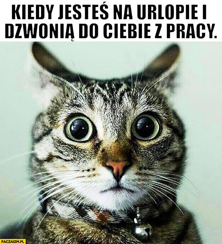 Kiedy jesteś na urlopie i dzwonią do Ciebie z pracy zdziwiony kot