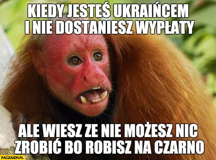 Kiedy jesteś Ukraińcem i nie dostaniesz wypłaty ale wiesz, że nic nie możesz zrobić bo robisz na czarno. Typowy Polak nosacz małpa