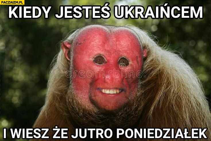 Kiedy jesteś Ukraińcem i wiesz, że jutro poniedziałek typowy Polak nosacz małpa